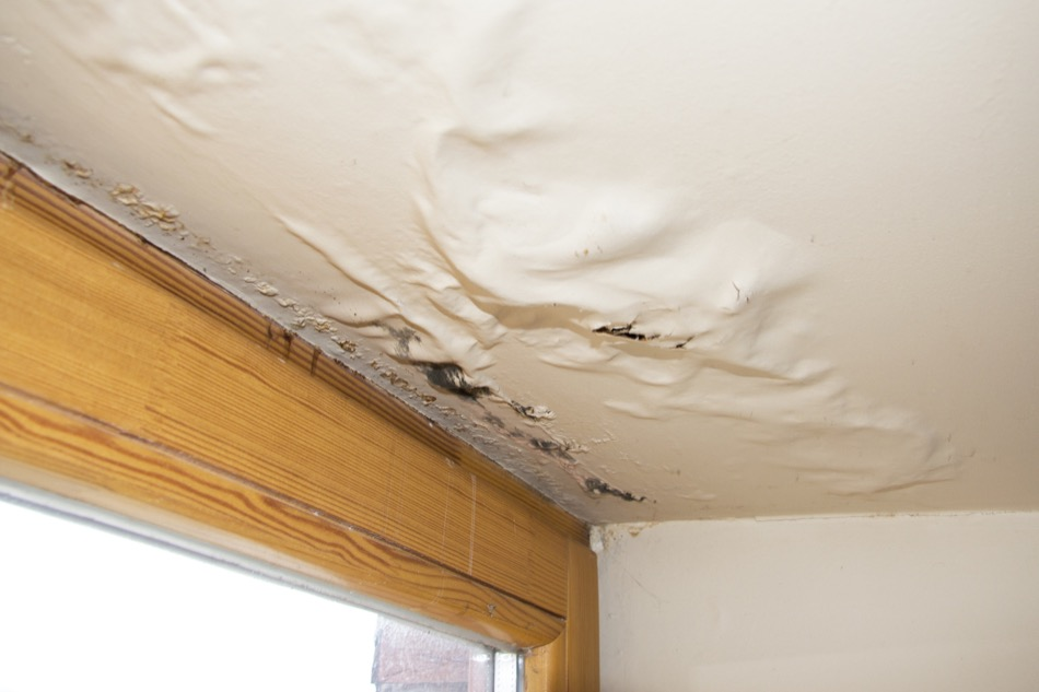 Why Is It Necessary to Remediate Mould in a Home?
